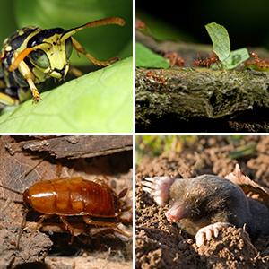 Skadedyrsbekæmpelse af alle typer skadedyr