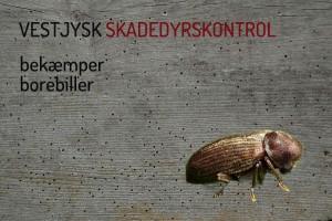 Borebiller i spær eller træværk? Kontakt VJSK uforpligtende.